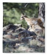 Pronghorn Antelope Fawn Fleece Blanket