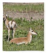 Pronghorn Antelope With Young Fleece Blanket