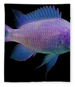 Purple Chromis Fleece Blanket