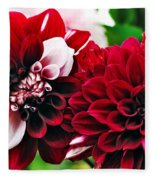 Red And White Variegated Dahlia Fleece Blanket