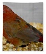 Red Billed Fire Finch Fleece Blanket
