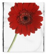 Red Gerber Daisy Fleece Blanket