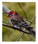 Red Head Black Tail Fleece Blanket