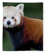 Red Panda Fleece Blanket