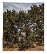 Red Spruce On Whitetop Mountain Fleece Blanket