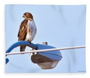 Red-tailed Hawk Perched Fleece Blanket