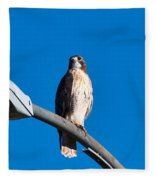 Red-tailed Hawk Surveying Territory Fleece Blanket