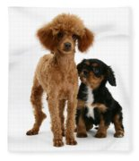Red Toy Poodle And Cavalier King Fleece Blanket