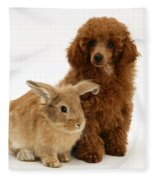 Red Toy Poodle Pup With Lionhead-cross Fleece Blanket