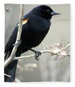 Red-winged Blackbird Agelaius Fleece Blanket