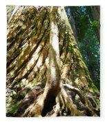Redwood Trees Forest Art Prints Redwoods Fleece Blanket