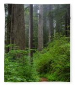 Redwoods Along Ossagon Trail Fleece Blanket