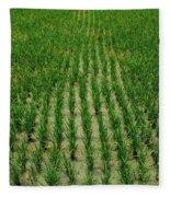 Rice Field Fleece Blanket