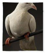 Ring-necked Dove Fleece Blanket