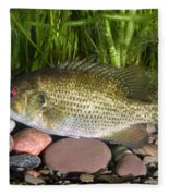 Rock Bass Fleece Blanket