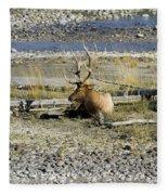 Rocky Mountains Elk Fleece Blanket