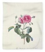 Rose Dutch Hundred Leaved Rose Fleece Blanket