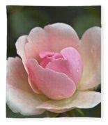 Rose Flower Series 12 Fleece Blanket