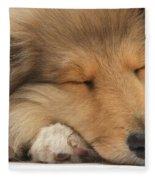 Rough Collie Pup Fleece Blanket