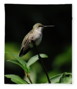Ruby-throated Hummingbird Female Fleece Blanket