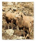 Safety In Numbers Fleece Blanket