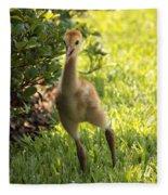 Sandhill Toddler Fleece Blanket