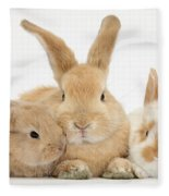 Sandy Rabbit And Babies Fleece Blanket
