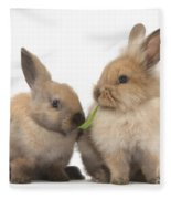 Sandy Rabbits Sharing Grass Fleece Blanket