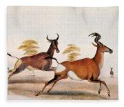 Sassaby And Hartebeest, Fleece Blanket
