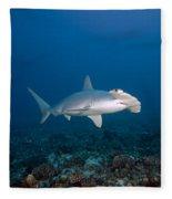 Scalloped Hammerhead Shark Fleece Blanket