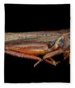 Science - Entomology - The Specimin Fleece Blanket