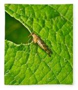 Scorpion Fly Nosing Around Fleece Blanket