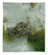 Sea Slug Fleece Blanket