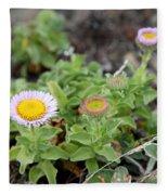 Seaside Fleabane Flowers Fleece Blanket