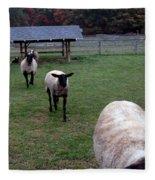 Sheep Feed Time Fleece Blanket