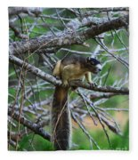 Shermans Fox Squirrel Fleece Blanket