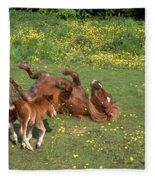 Shetland Pony And Foal Playing Fleece Blanket