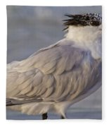 Siesta Key Royal Tern Fleece Blanket