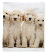 Six Labradoodle Pups Fleece Blanket