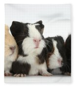 Six Young Guinea Pigs In A Row Fleece Blanket