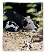 Sleepy Arizona Cows Fleece Blanket