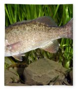 Smallmouth Bass Micropterus Dolomieu Fleece Blanket
