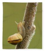 Snail In Dew Fleece Blanket