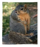 Squirrel Looking For A Hand Out Fleece Blanket