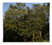 Stand Of Sugar Maple Trees Fleece Blanket