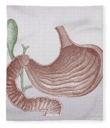 Stomach And Bile Duct Fleece Blanket