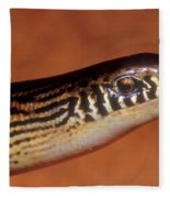 Striped Lateral Fold Lizard Fleece Blanket
