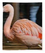 Strolling Flamingo Fleece Blanket