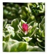Succulent's Ruby Fleece Blanket