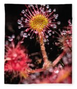 Sundew, Vancouver Island, British Fleece Blanket